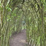 Real willow tunnel