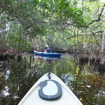 entering the mangrove tunnels