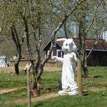 Milburns Easter Bunny