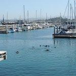 Monterey Bay sea lions
