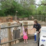 Feed the giraffes for a modest fee