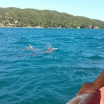 Dolphins swam alongside our boat