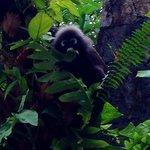 Local monkey at breakfast