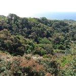 Zipline area (from top)