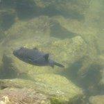 fish swimming in Marina