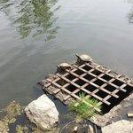 Turtles enjoying the weather on the lake