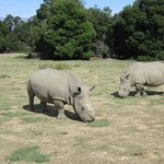 Higgins and Lady- Couple that survived poaching