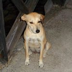 Honey - the resort dog!