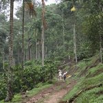 Braveheart Trail