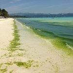 """""""Green beach"""" not """"white beach"""""""