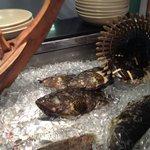 Fresh fish at the Jala