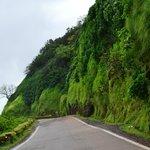 Amboli forests