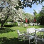 Ta en fika i vår underbara äppelträdgård. Vi har servering av både varm och kall mat, glass m.m.