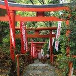 奥の院に行く途中の鳥居。自然と日本情緒がいいです。