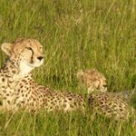 Mum and baby cheetah!