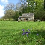 Jackdaw cottage in Spring