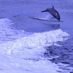 you may see dolphins up close on the catamaran ride
