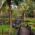 View of gardens at Sepilok Nature Lodge