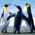 Pinguine sind da