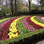 Tulips and more!