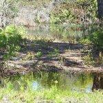 one of many salt marsh & small ponds