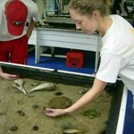 students exploring the touch tanks