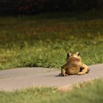 one of the many frogs!