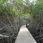 Acceso entre manglares a la segunda zona de playa