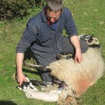Andrew with new born Lambs