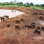 The animals at the waterhole