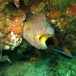 diving at aliwall shole