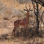 Beautiful...... Impala