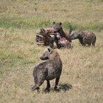 Hyena's Dinnertime