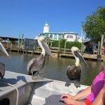 Pelikanerne fulgte os afsted