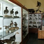Tillamook Museum - many avian displays