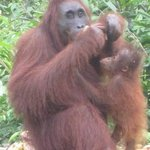 Ahmad and her baby Algis, Ahmad is 42 and this is her 6th baby, Camp Leakey