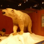 巨大な北極熊の剥製