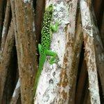 Une lézard sur un arbre