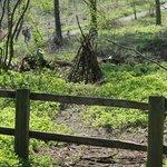 GUISBOROUGH FOREST