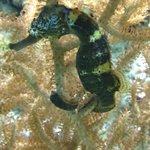Shedd Aquarium IV