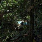 fern paradise