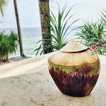 Coconut gemmin