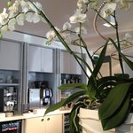 Lobby/ Cafe area. Beautiful orchids