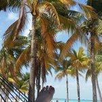 Blue skies...  palm trees...