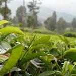 Agrowisata Tambi