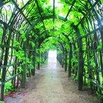Парк усадьбы Архангельское - зеленый туннель