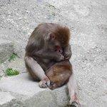 園内のお猿さん