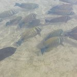 fish that you can sea in the salt lake!