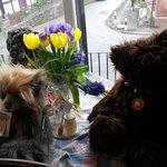 Lovely bears in the window for sale
