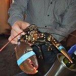 Oosterschelde Lobster
